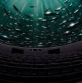 Cinema no planetário: Espaço tecnológico FTD Digital Arena exibe filmes educativos gratuitamente para escolas