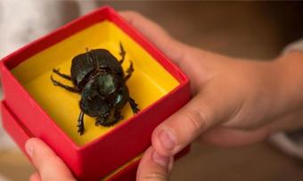 """Adaptação de """"Escaravelho do Diabo"""", um clássico brasileiro da literatura juvenil, estreou em circuito comercial dia 14 de abril"""